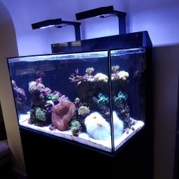 Anemone Id Page 1 Identification Id Needed Reefbase Marine Fish Reef Keeping Forum